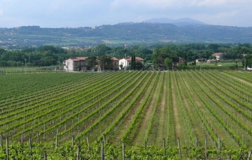 Torgiano: history, wines and crafts